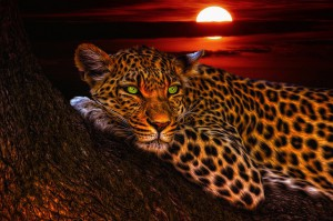 leopard-1230855_640